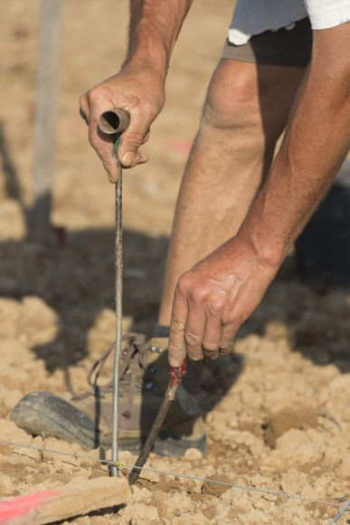 Plantation de vignes en 2016