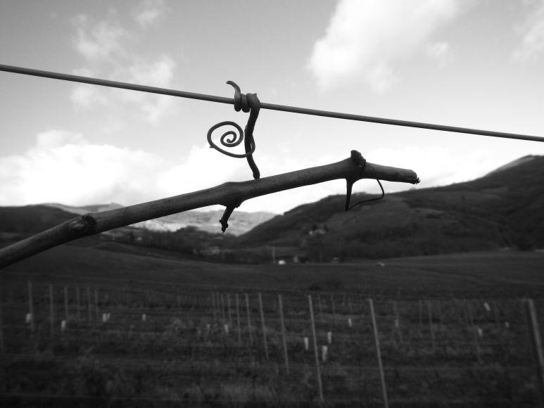 Taille de la vigne, faites vos comptes :-)