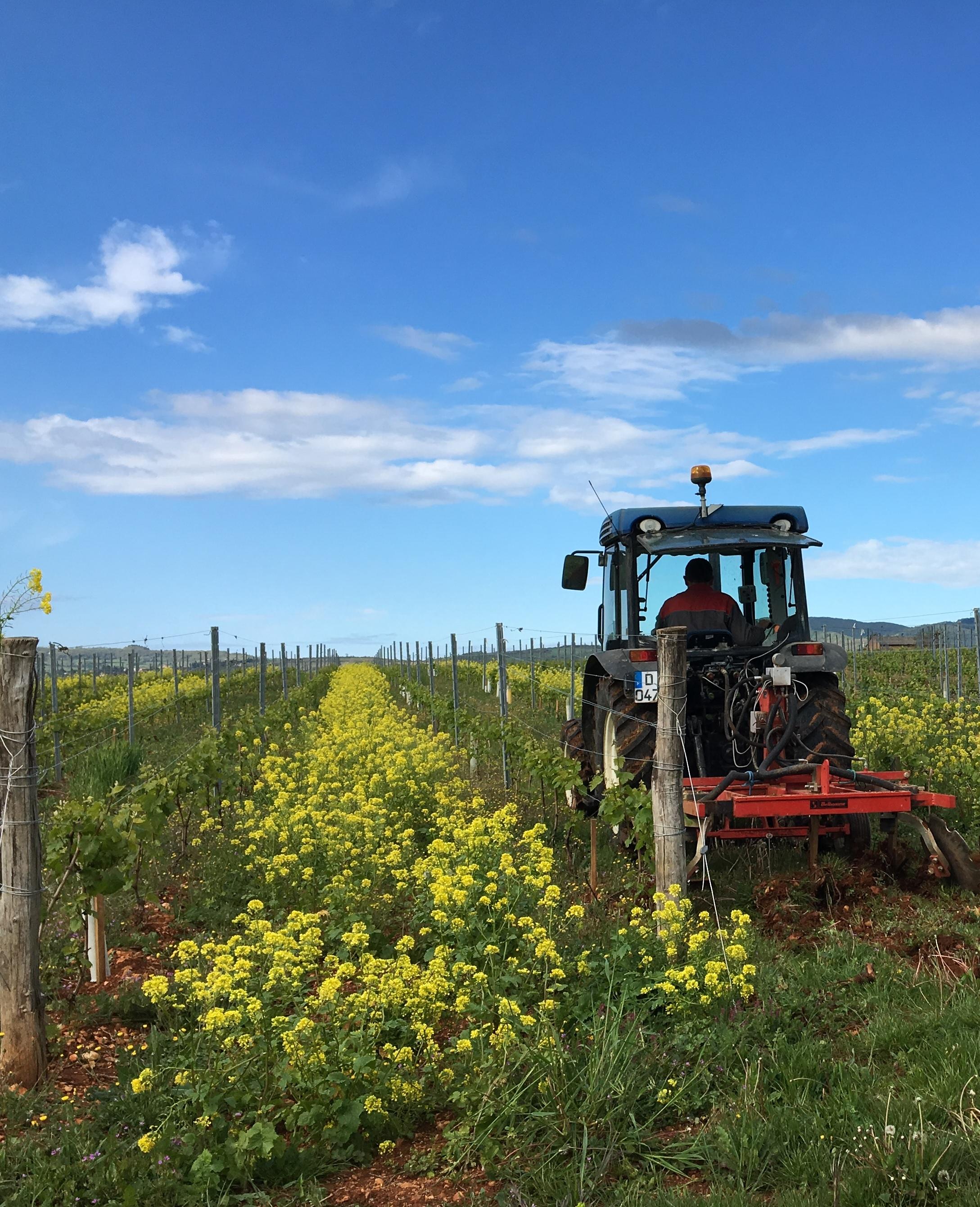 Agroécologie dans les vignes
