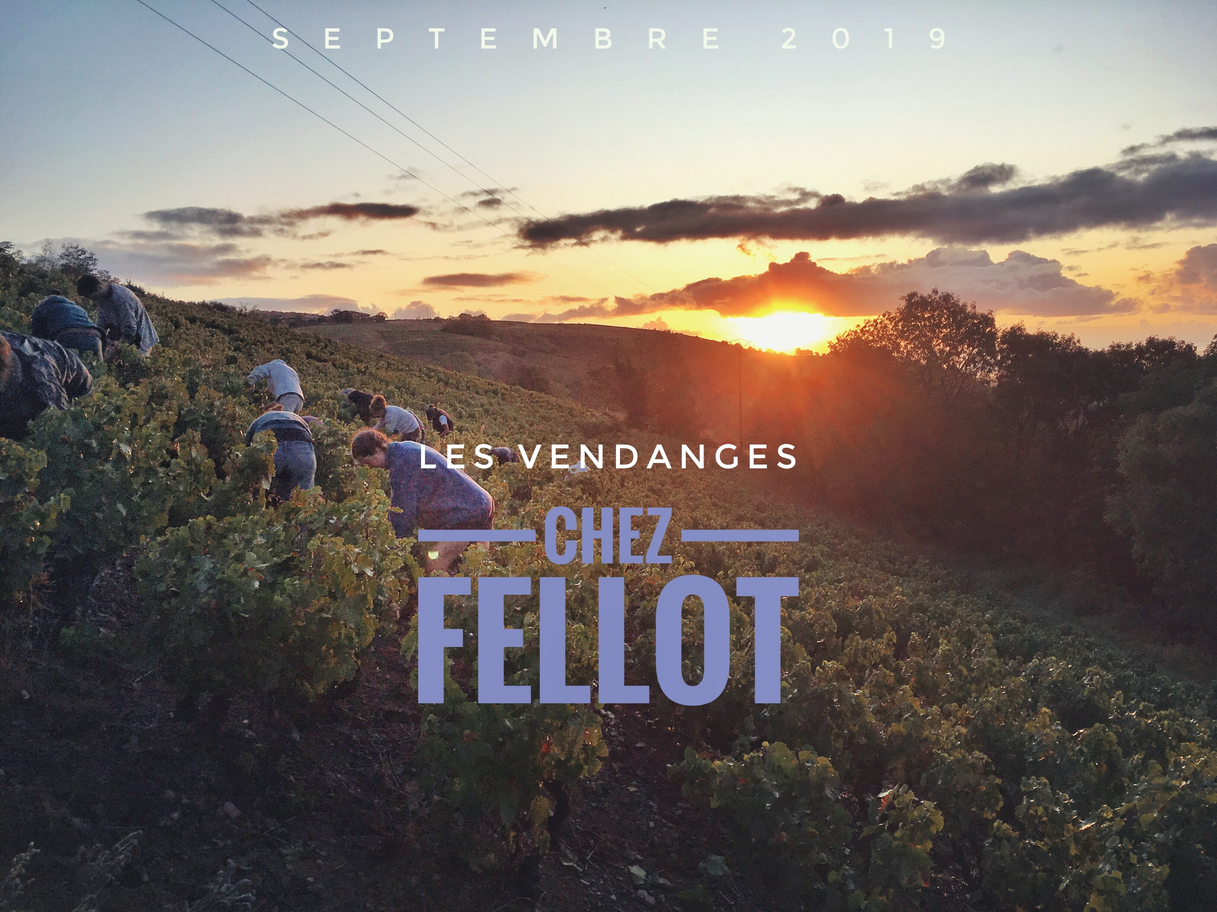 Photos des vendanges 2019