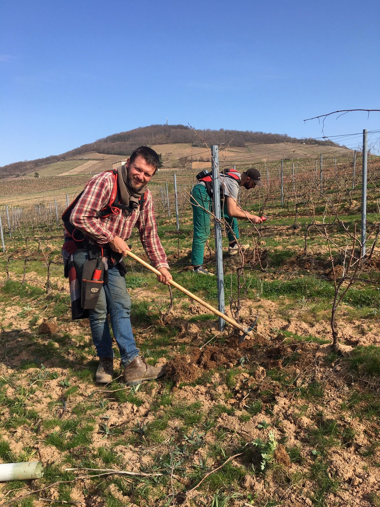 Le travail de la vigne continue !
