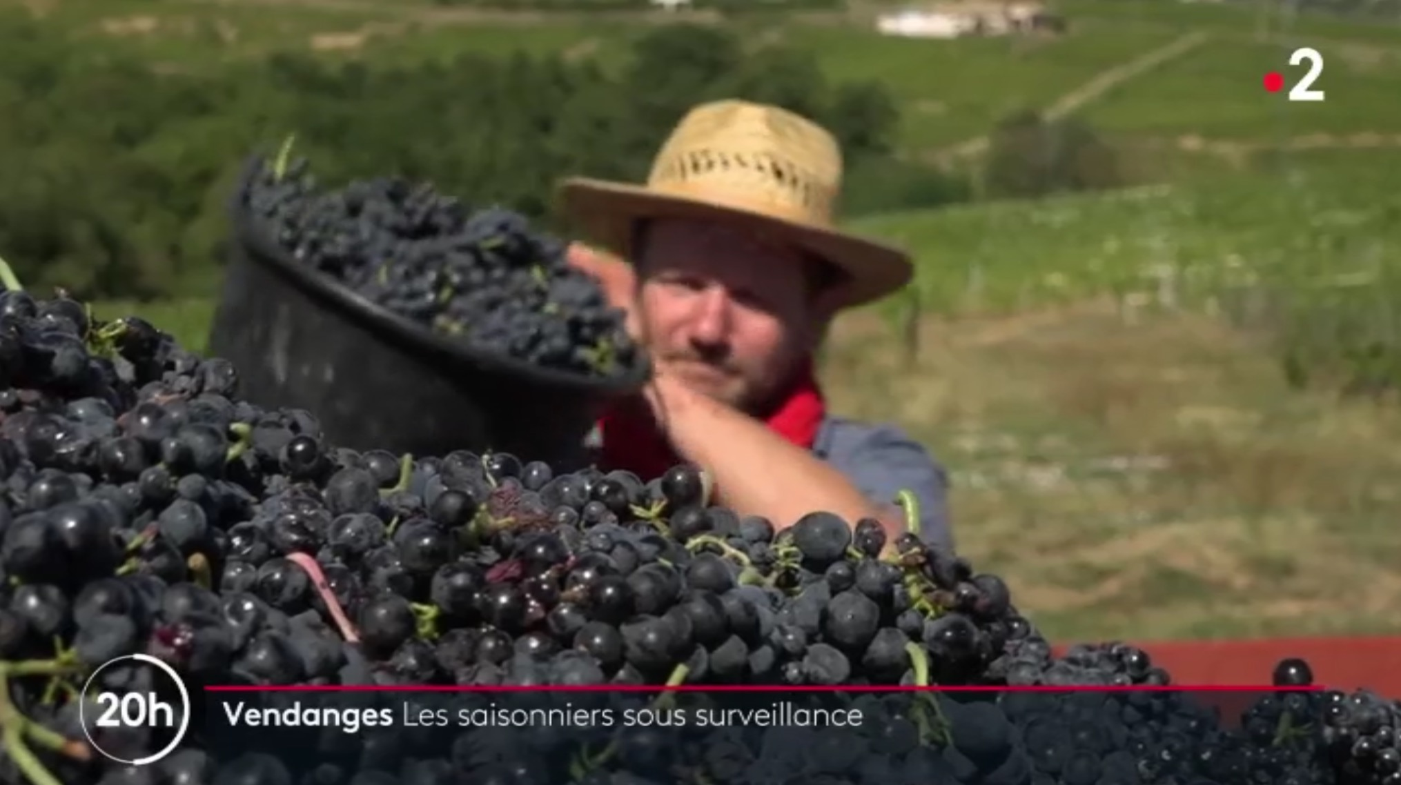 France 2 : Vendanges 2020 chez les Fellot