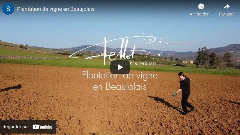 Vidéo de la plantation de VIgne